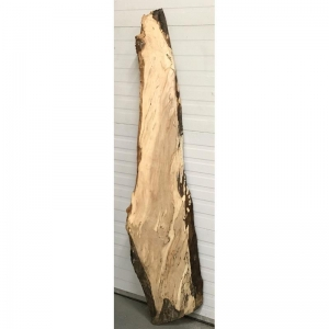 spalted silver maple 8-16x72